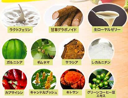 コンブチャ生サプリの11種の健康サポート成分の画像